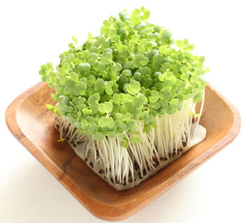 broccoli-sprouts-with-plate